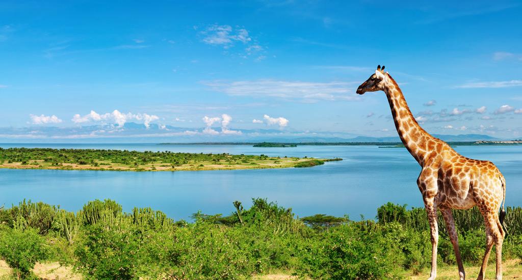 Фото: Африканский пейзаж