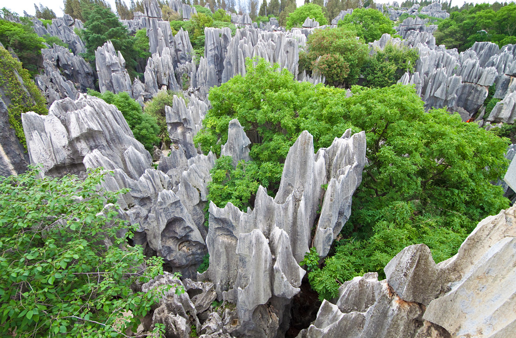 Фото: Каменный лес Шилинь, Китай