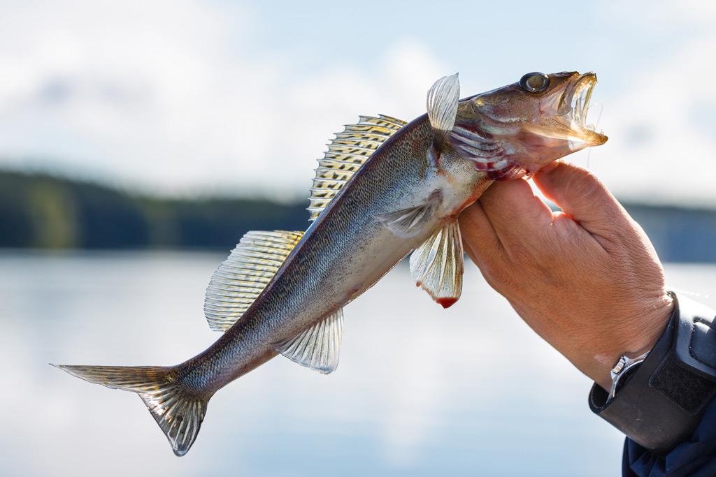 Kalastuksenhoitomaksu R-Kioski