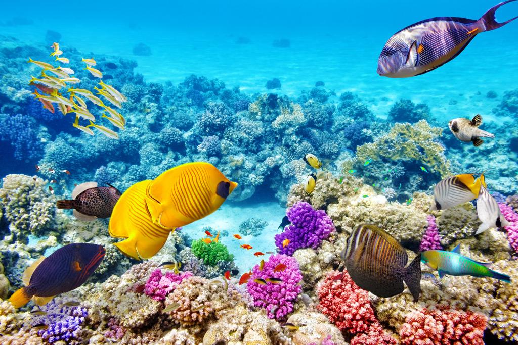Фото: Большой Барьерный Риф