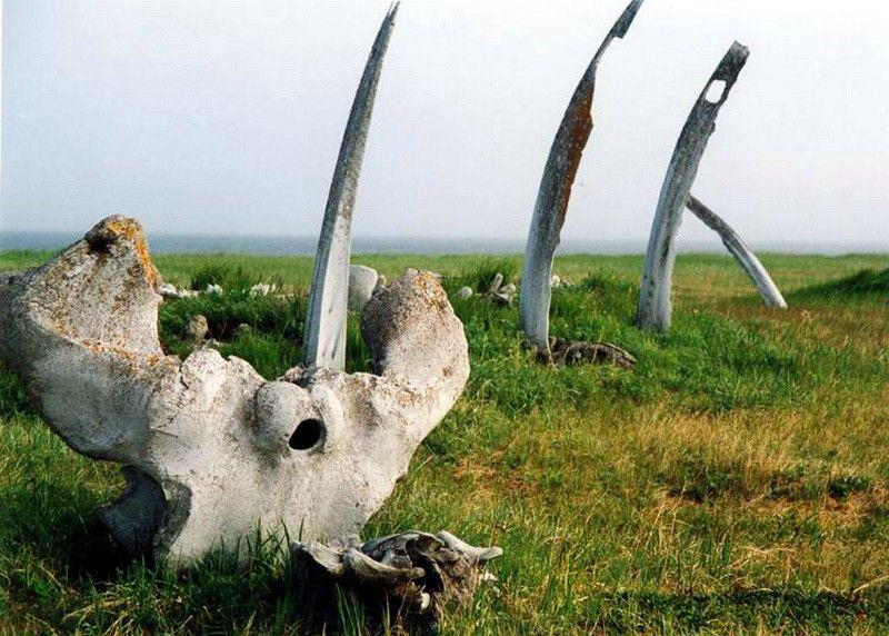 Фото: Китовая аллея