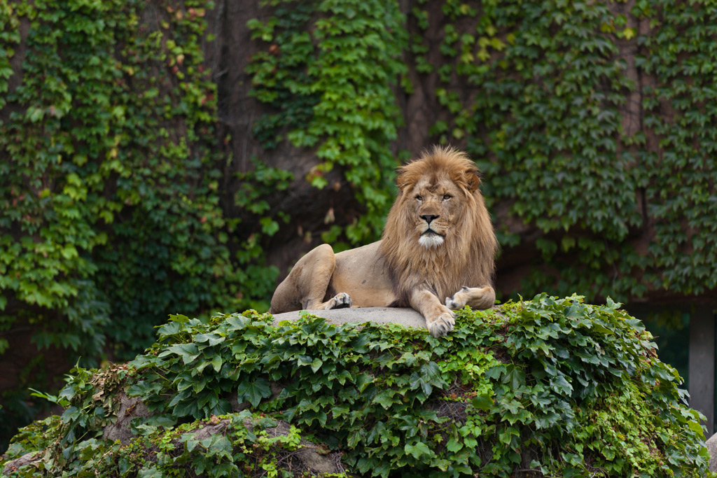 Фото: Lincoln Park Zoo
