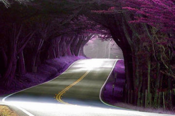 tunnel-of-trees