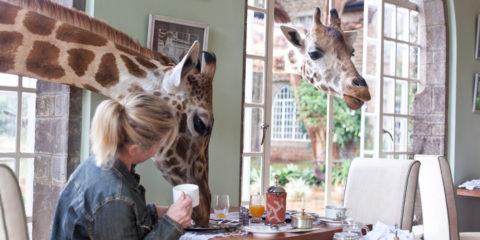 breakfast-with-giraffes