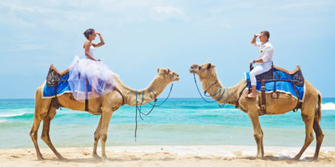 camel-ride-on-wedding-day