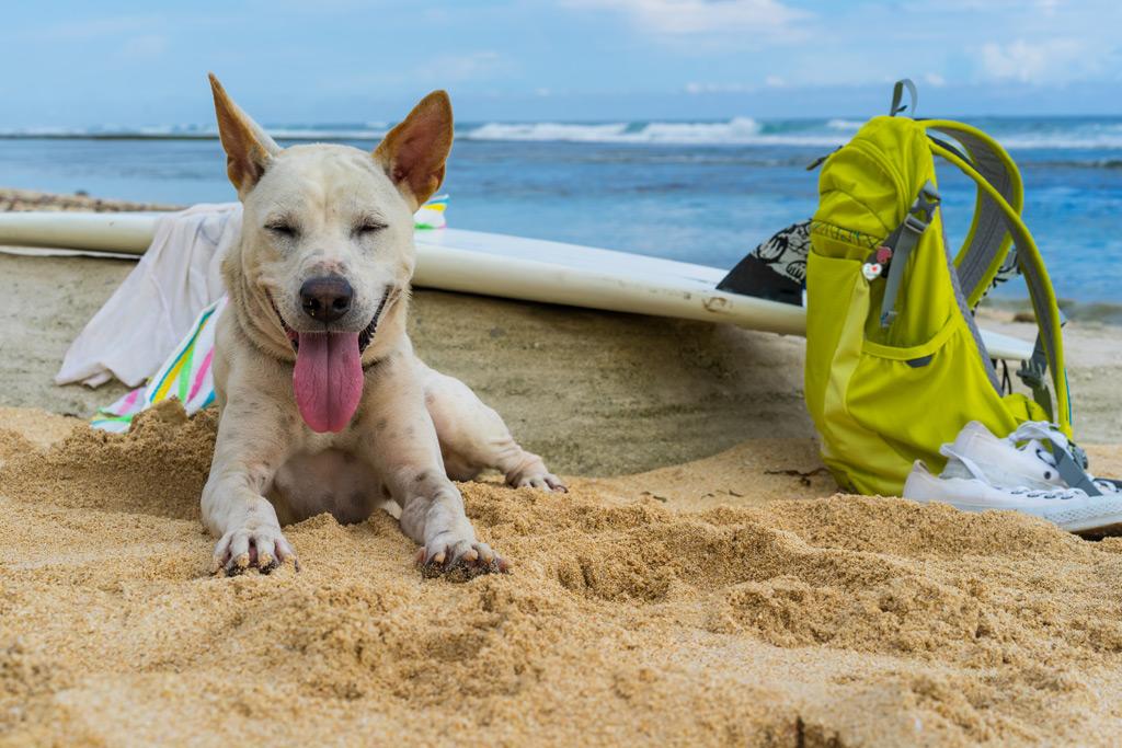dog-lying-on-the-sand