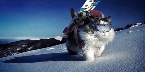 Фото: Кот-сноубордист