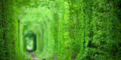 magic-tunnel-of-love