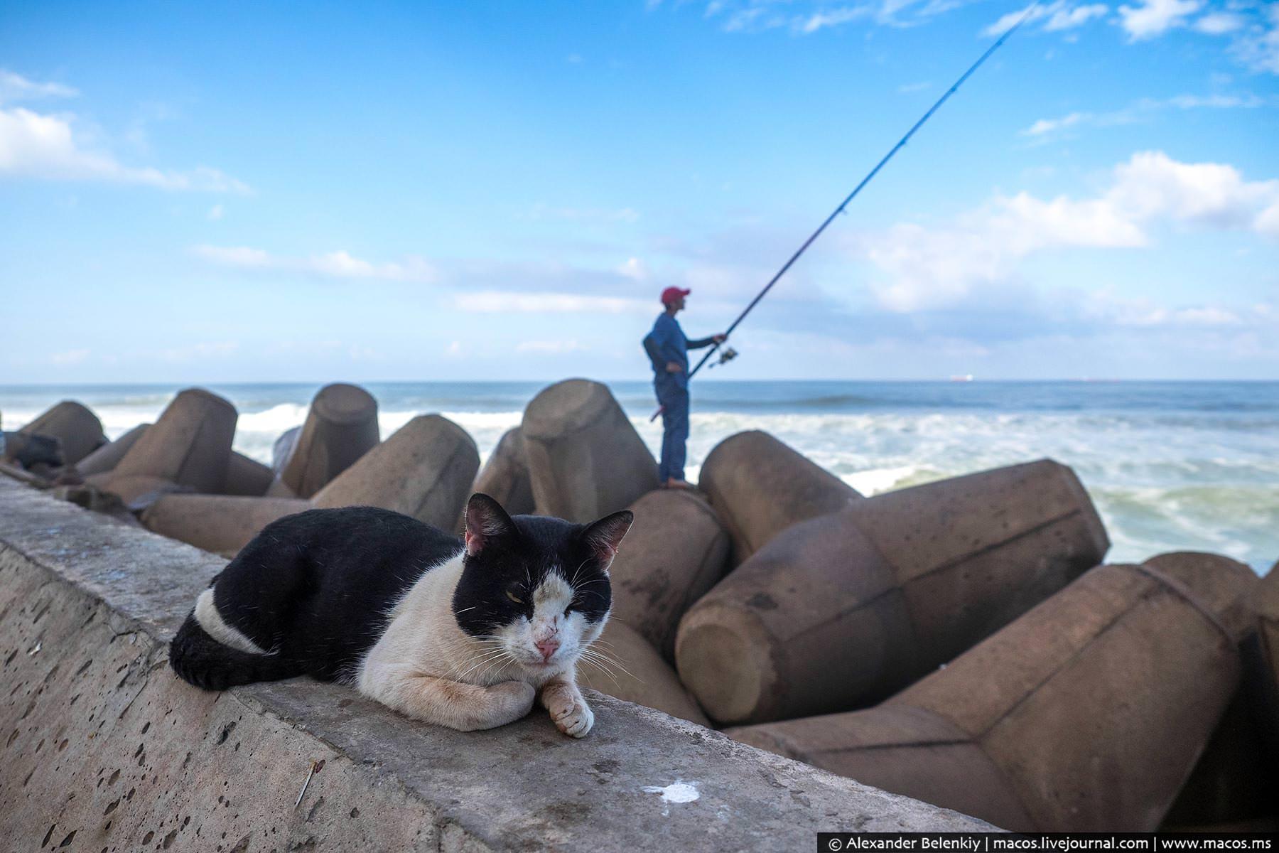 Фото: Кот на набережной