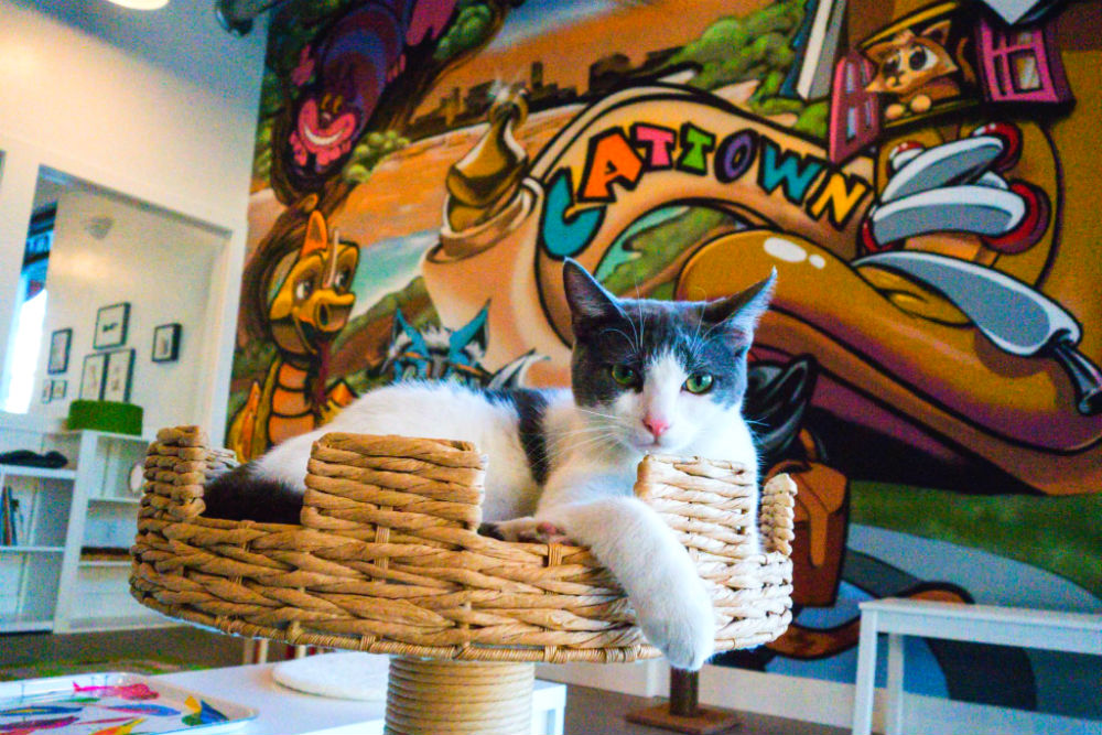Фото: CAT TOWN CAFE