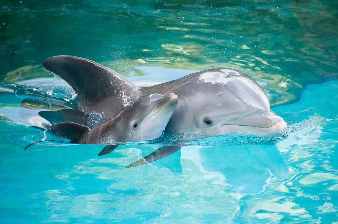 Фото: Дельфины