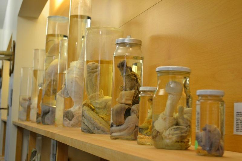 Фото: Музей фаллосов