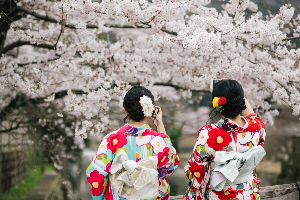 Фото: Сакура