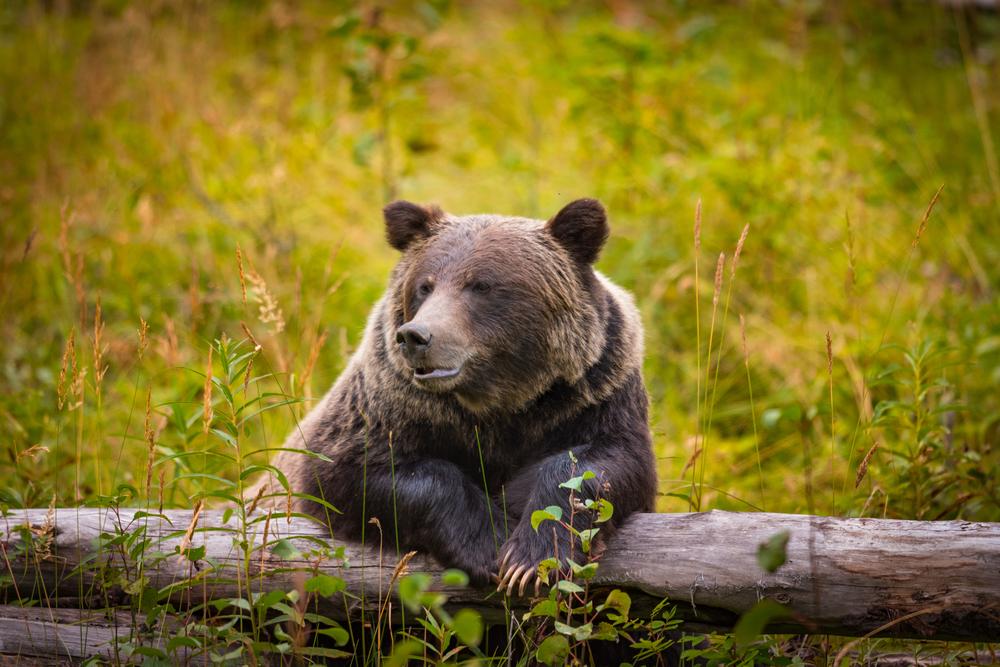 Фото: Национальный парк Банф