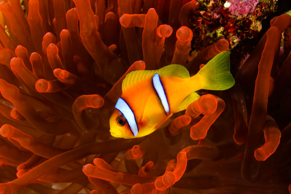 Фото: Коралловый риф