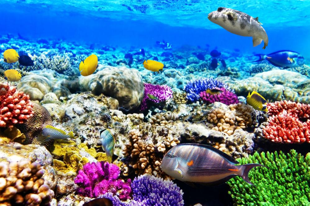 Фото: Райский риф