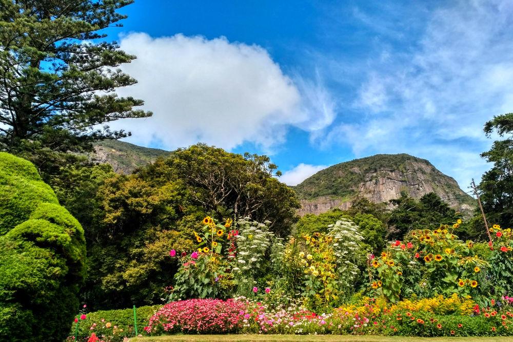 Фото: Ботанический сад