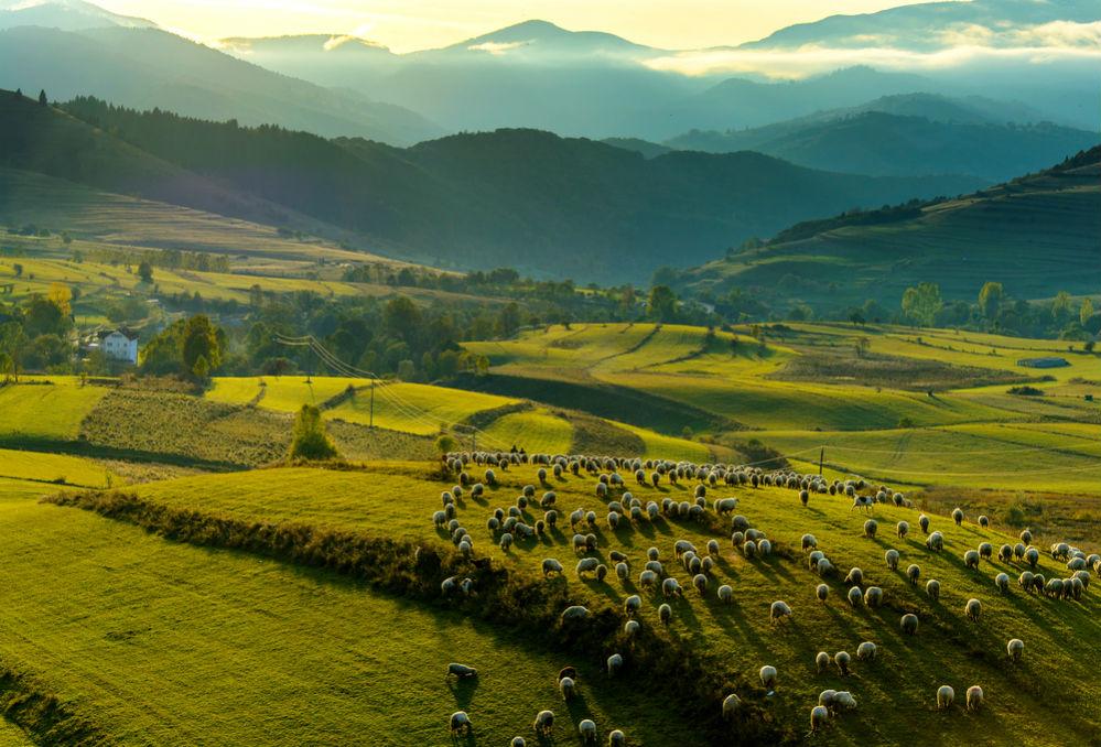Фото: Румыния