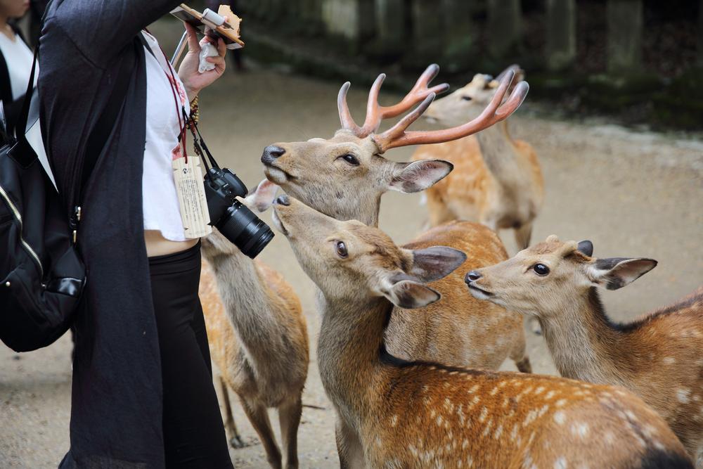 Фото: Олени ждут еду