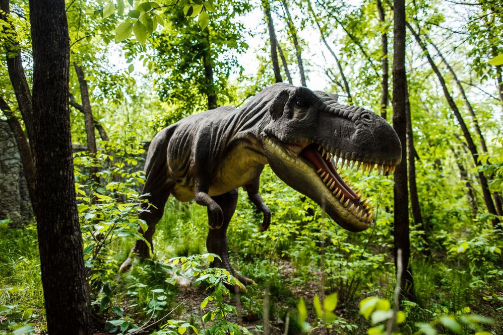 Фото: Парк динозавров
