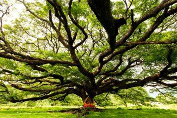 Фото: Дерево