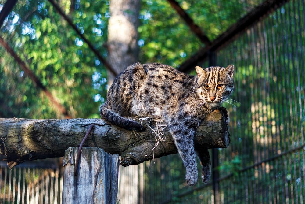 Photo: Zoo
