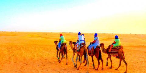 Фото: Верблюды
