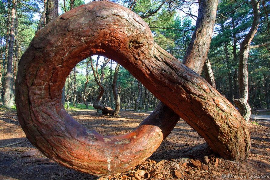 Фото: Деревья в лесу