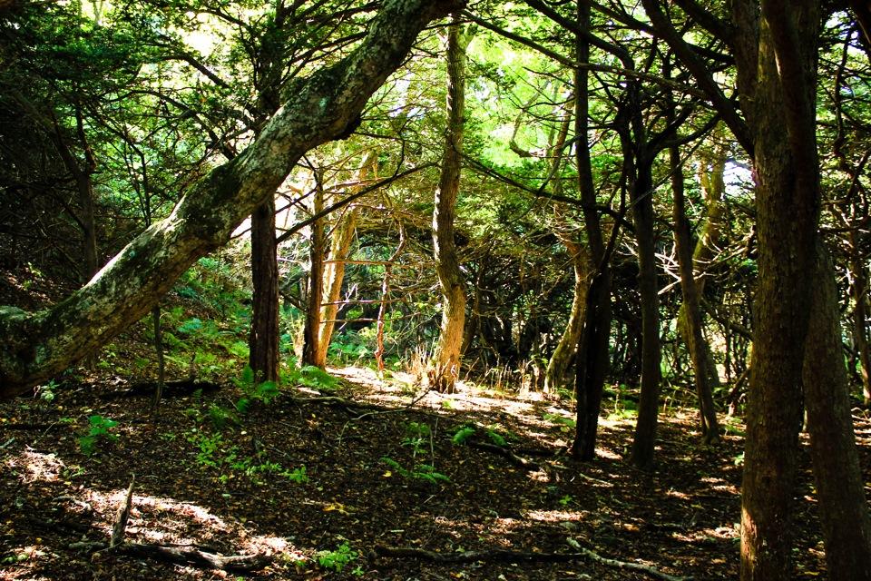 Фото: Деревья