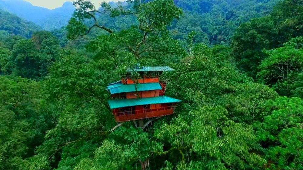 Фото: Отель на дереве, Индия
