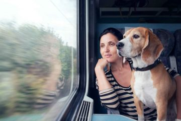 Фото: Как перевозить животных в поезде