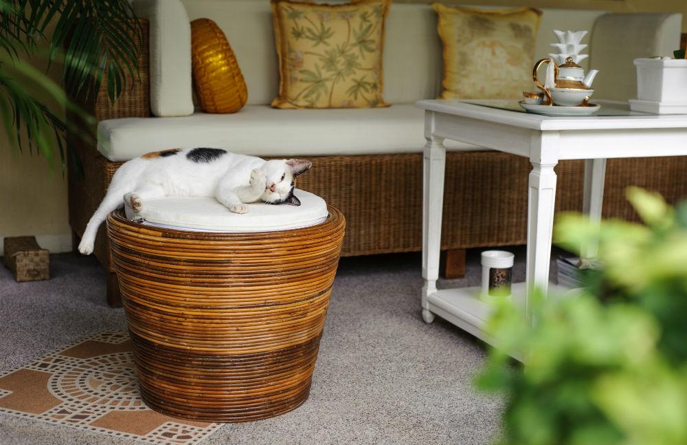 Фото: Кот в отеле