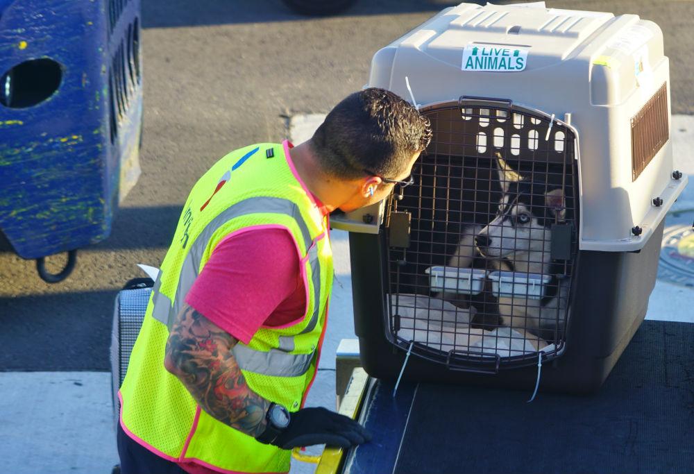 Фото: Собака в аэропорту