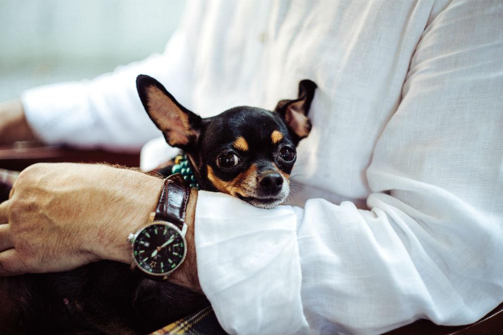 Фото: Собака в поезде
