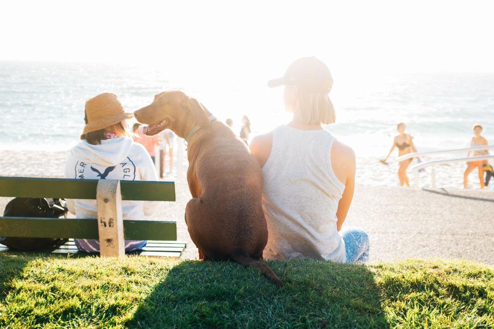 Фото: Всё о путешествиях с животными