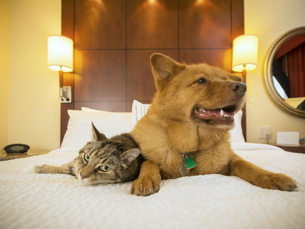 Фото: Домашние животные в гостинице