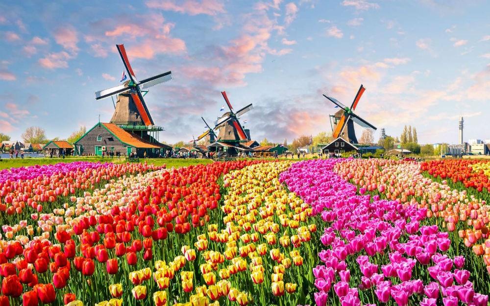 Фото: Нидерланды
