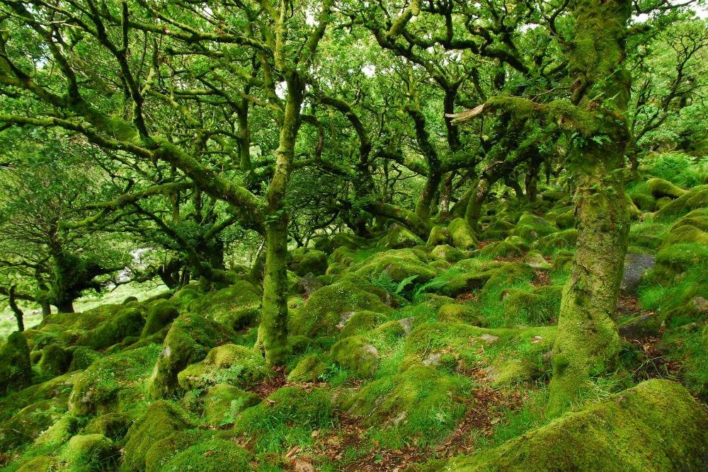Фото: Запретный лес