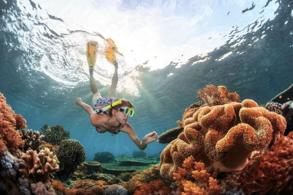 Фото: Кораллы