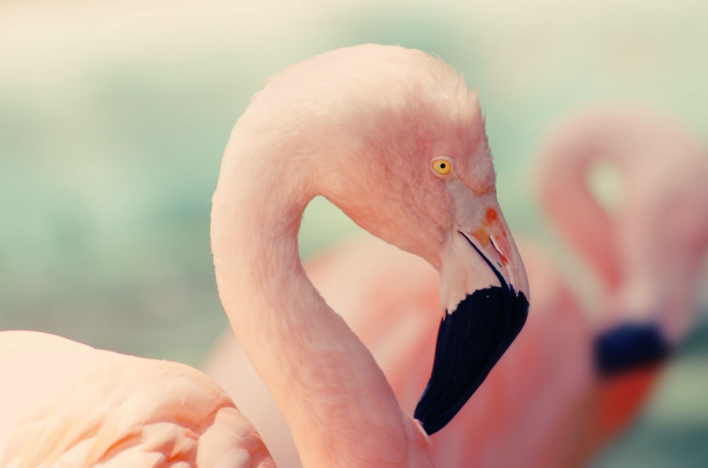 Фото: Фламинго