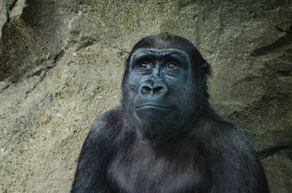 Фото: Зоопарк