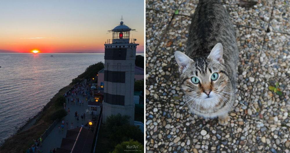Фото: Анапский маяк и коты
