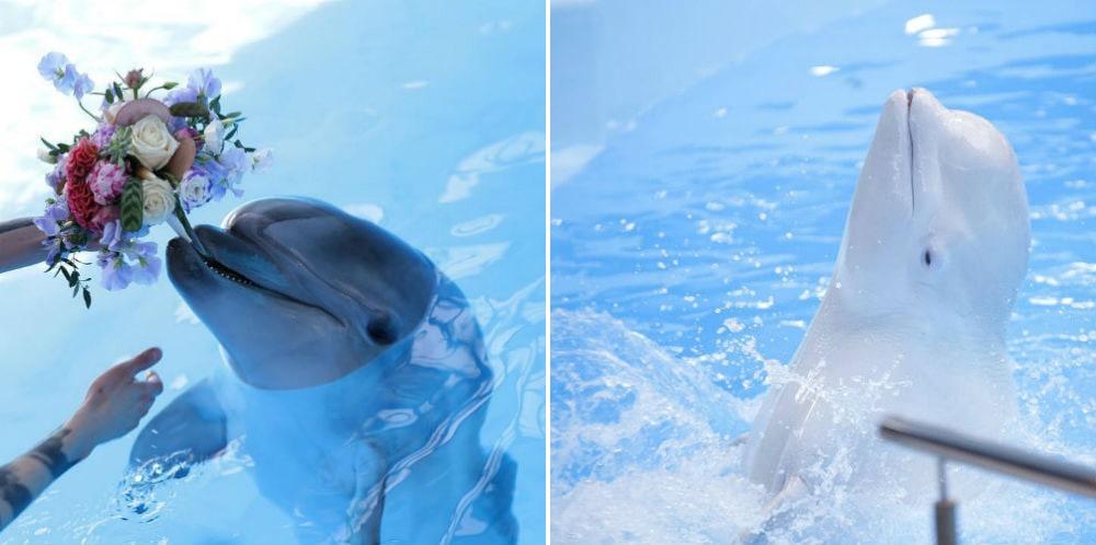 Фото: Дельфинарий