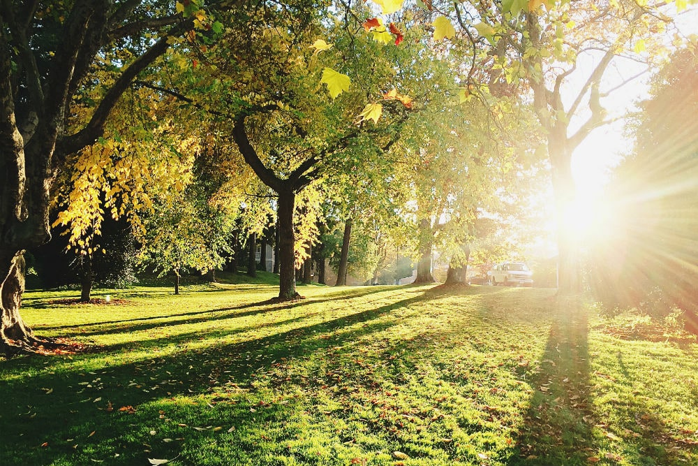 Photo: Park
