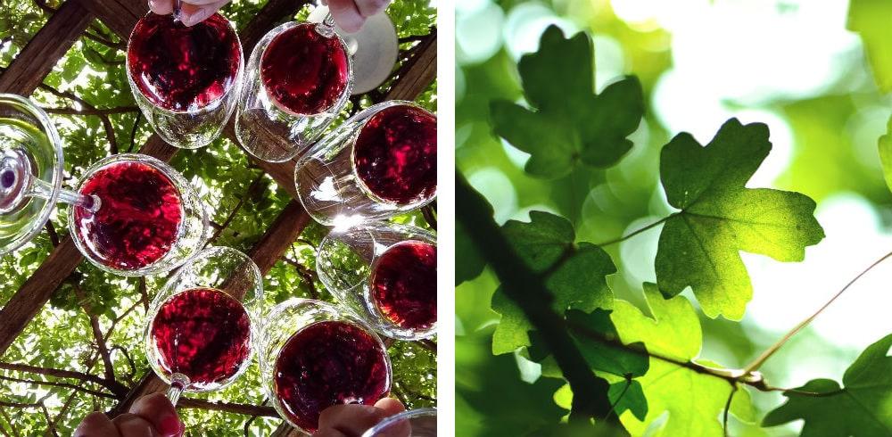 Фото: Виноградники