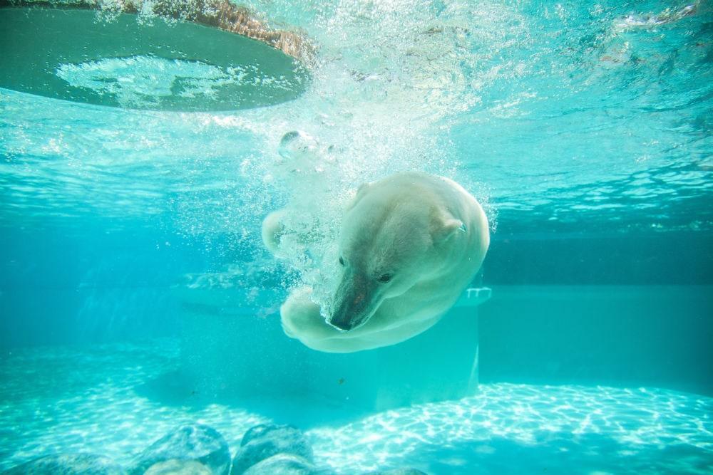 Photo: Zoological Garden