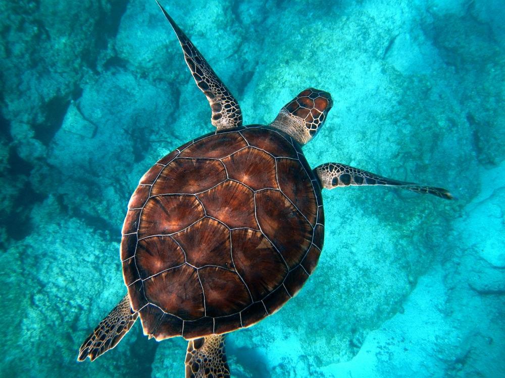 Фото: Черепаха
