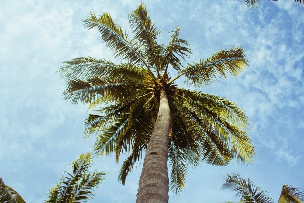 Фото: Пальмы Гид по  Афинам Гид по бесплатным Афинам: древние руины, смотровые площадки и экскурсии от местных жителей palms