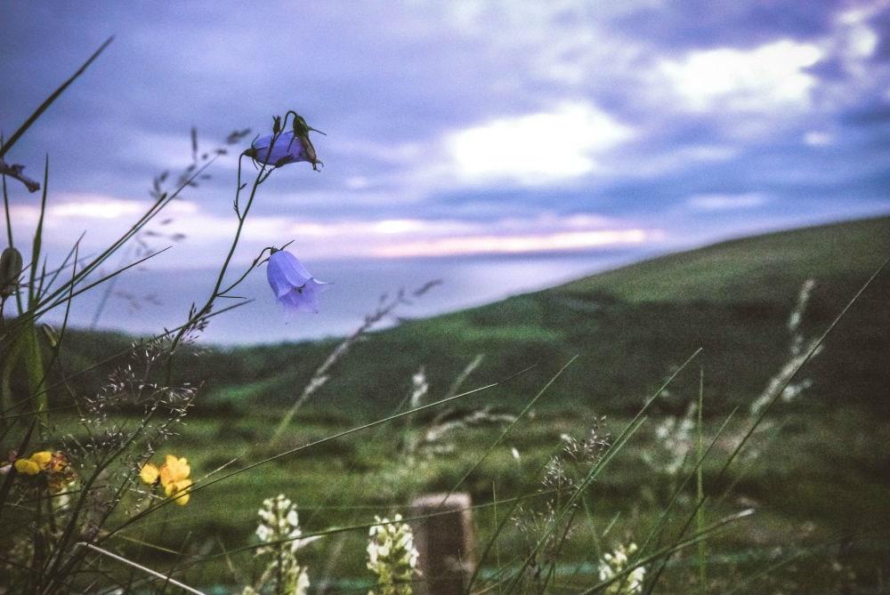 Фото: Колокольчики  Расцветающая Европа: куда поехать весной bluebells