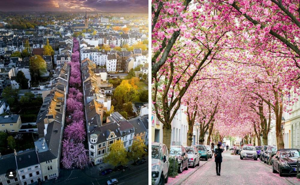 Фото: Бонн Расцветающая Европа: куда поехать весной Расцветающая Европа: куда поехать весной bonn